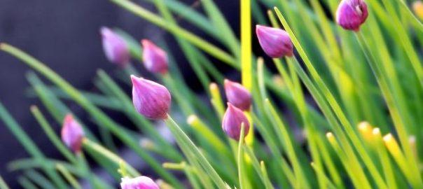 herb garden trends